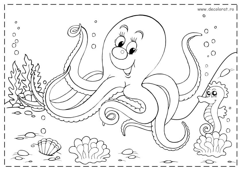 Planse De Colorat Animale Marine Si Polare